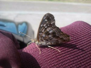 A Lovely Mariposa