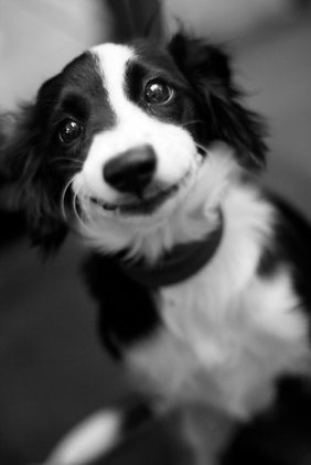 "Smiling Dog"" by Benjamin Liew"