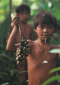 vanishing cultures amazon